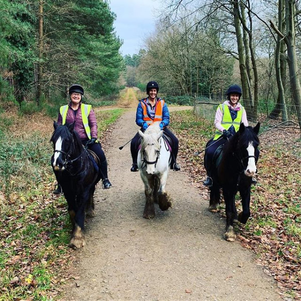 Forest riding in Thetford Forest
